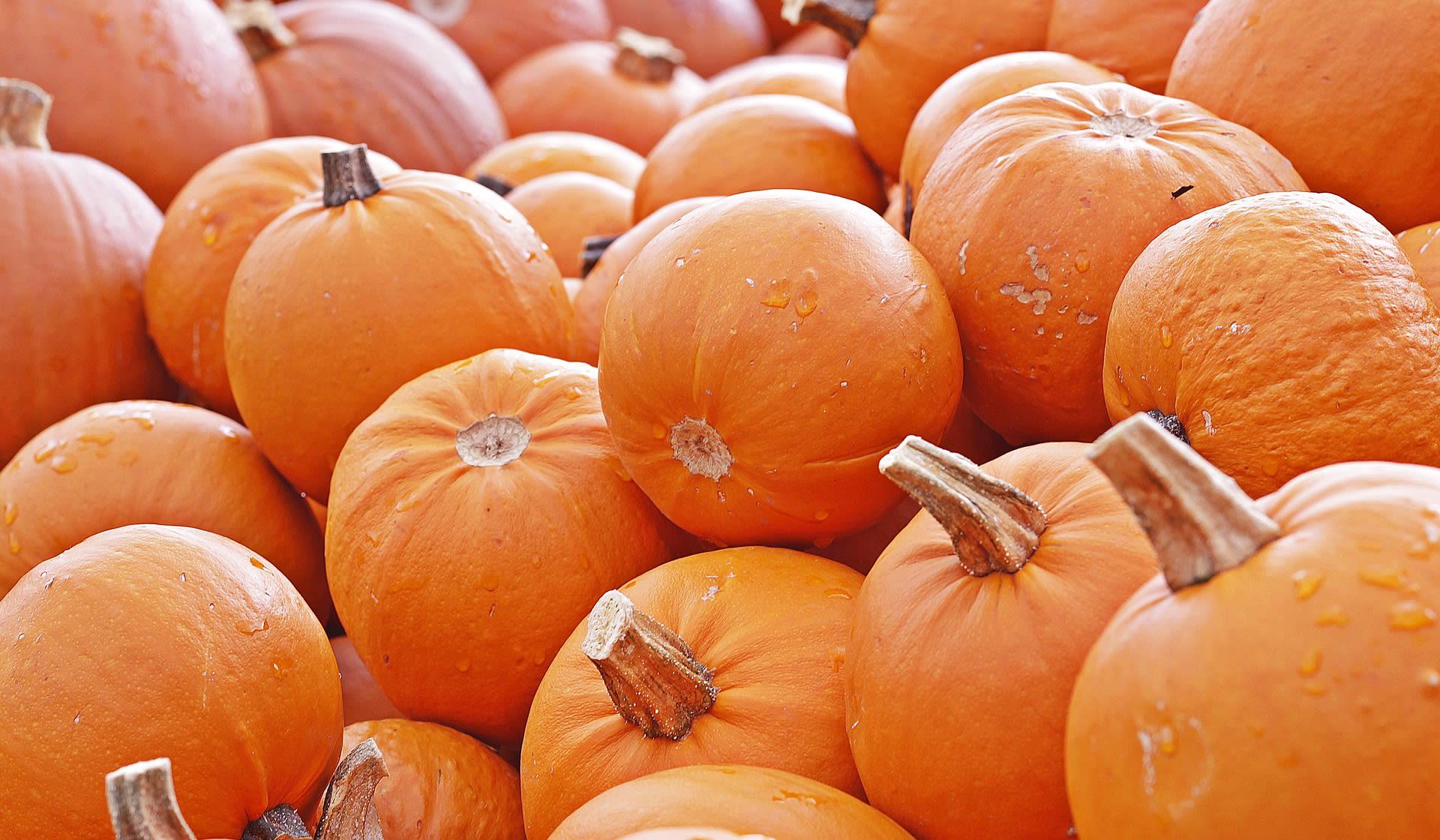 LST Halloween Plans
