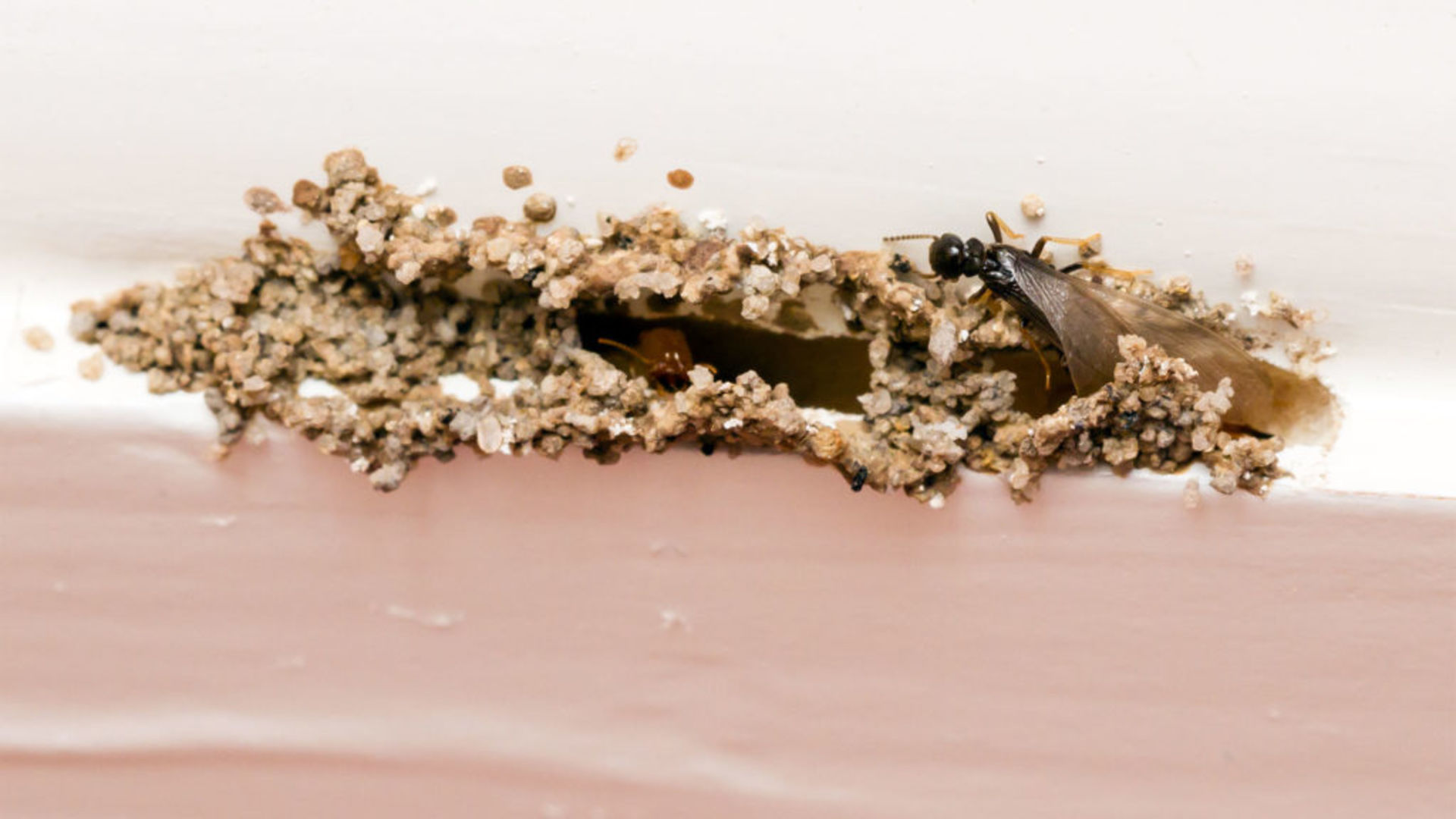 How to Prevent a Termite Infestation: Ways to Keep These Pests From Devouring Your Home