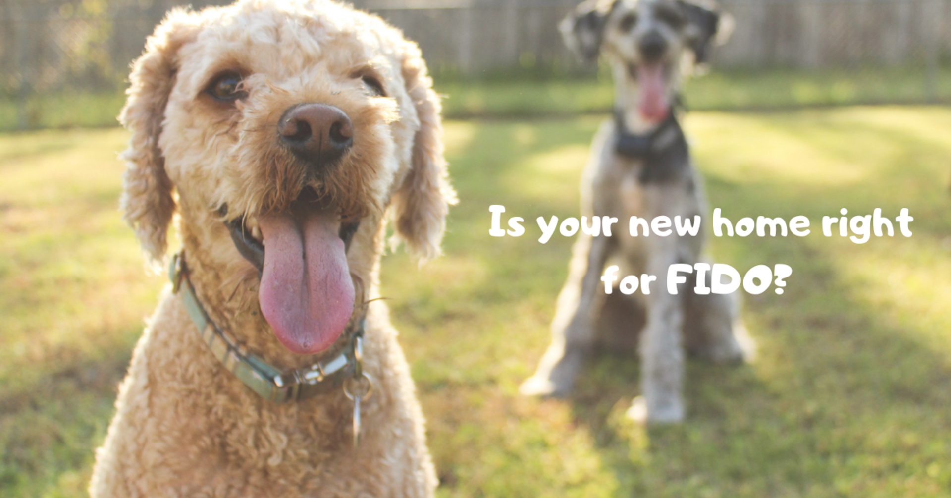 Is your new home right for FIDO?