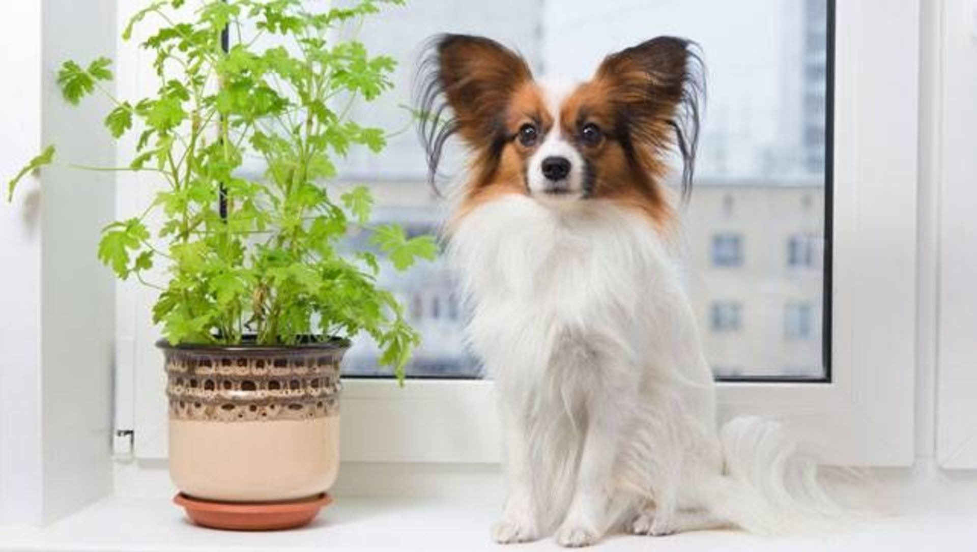 The Safest House Plants for Pet Owners