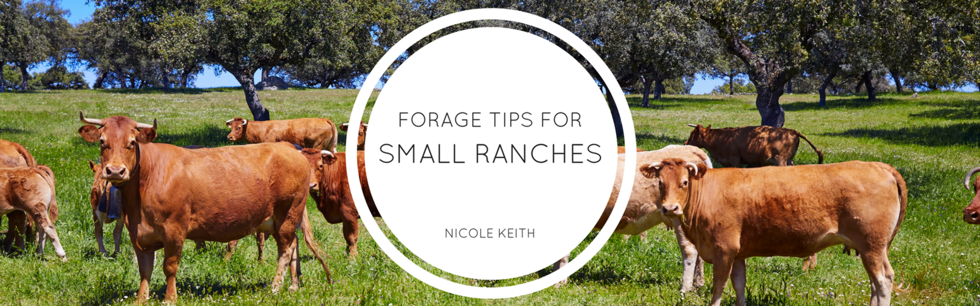 Tips for Small Ranches