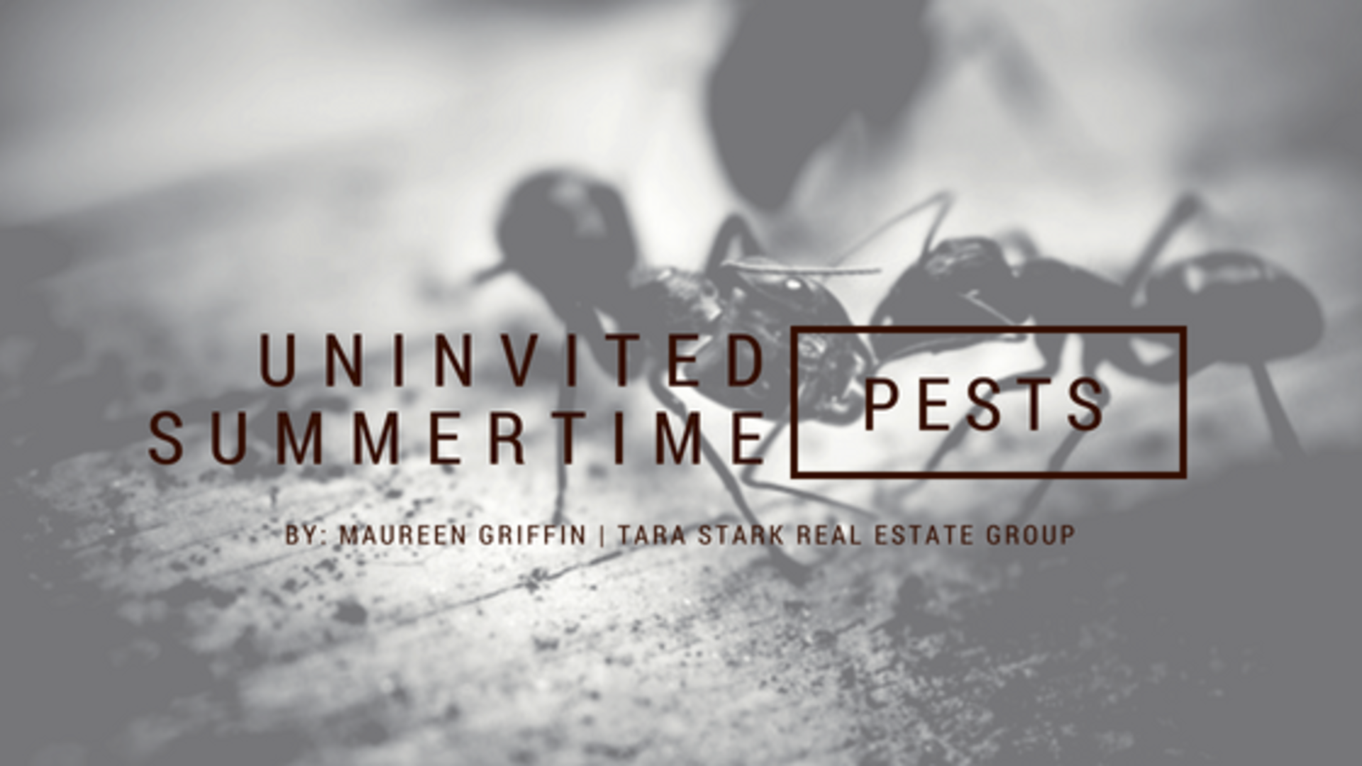 Uninvited Summertime Pests