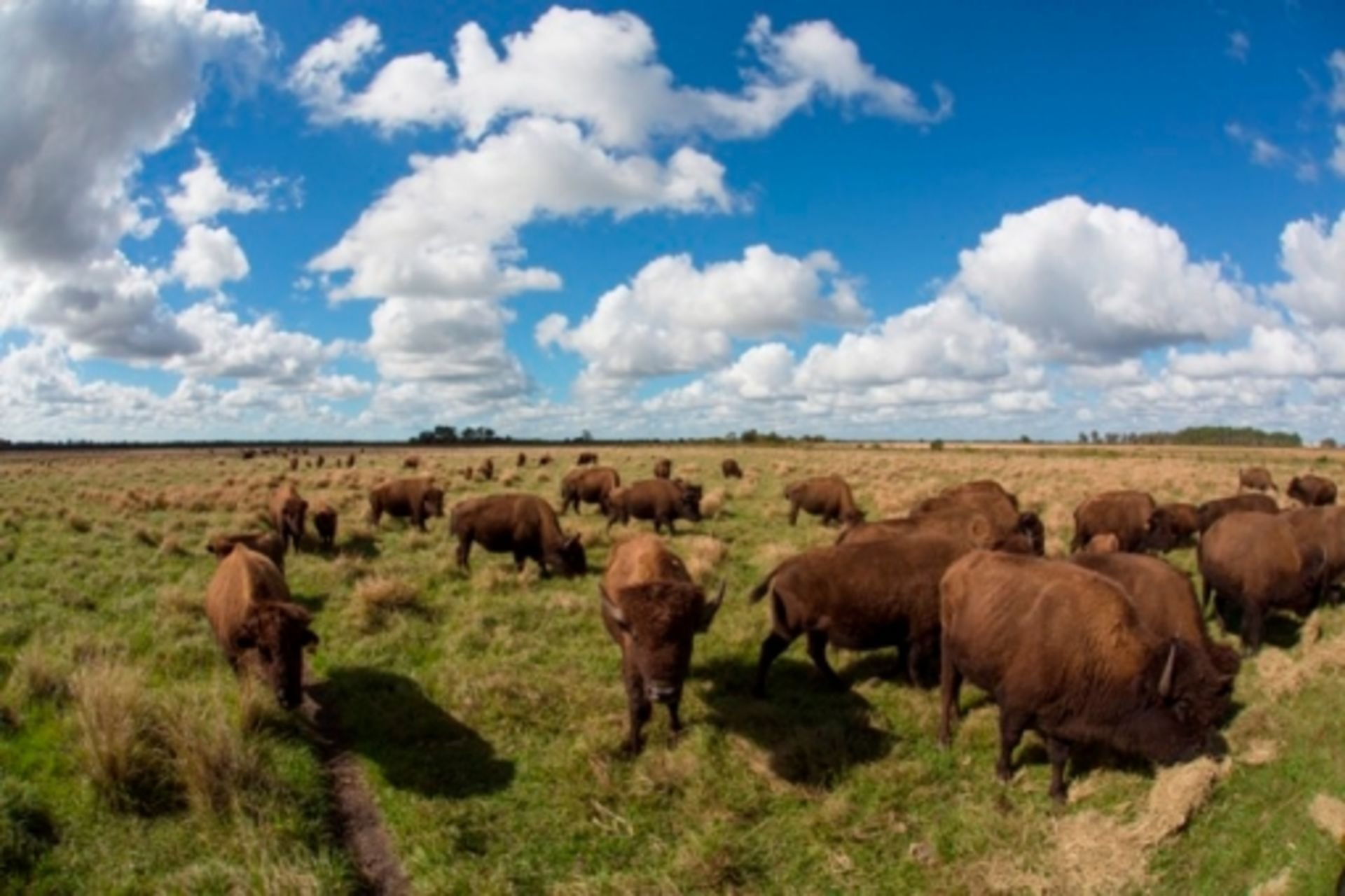 5 Tips For Selling Your Farm or Ranch