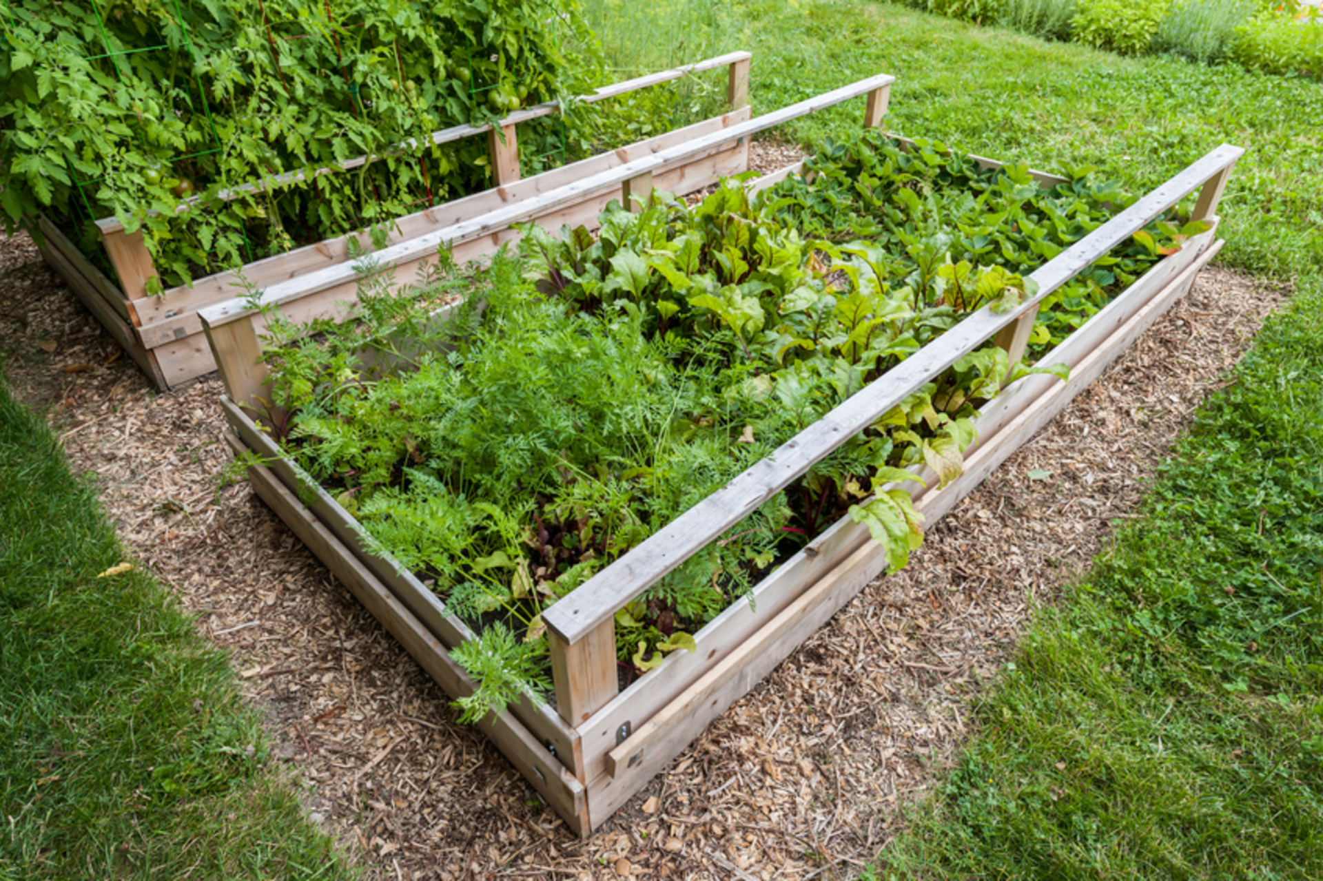 GROW YOUR OWN FOOD AND PROPERTY VALUE