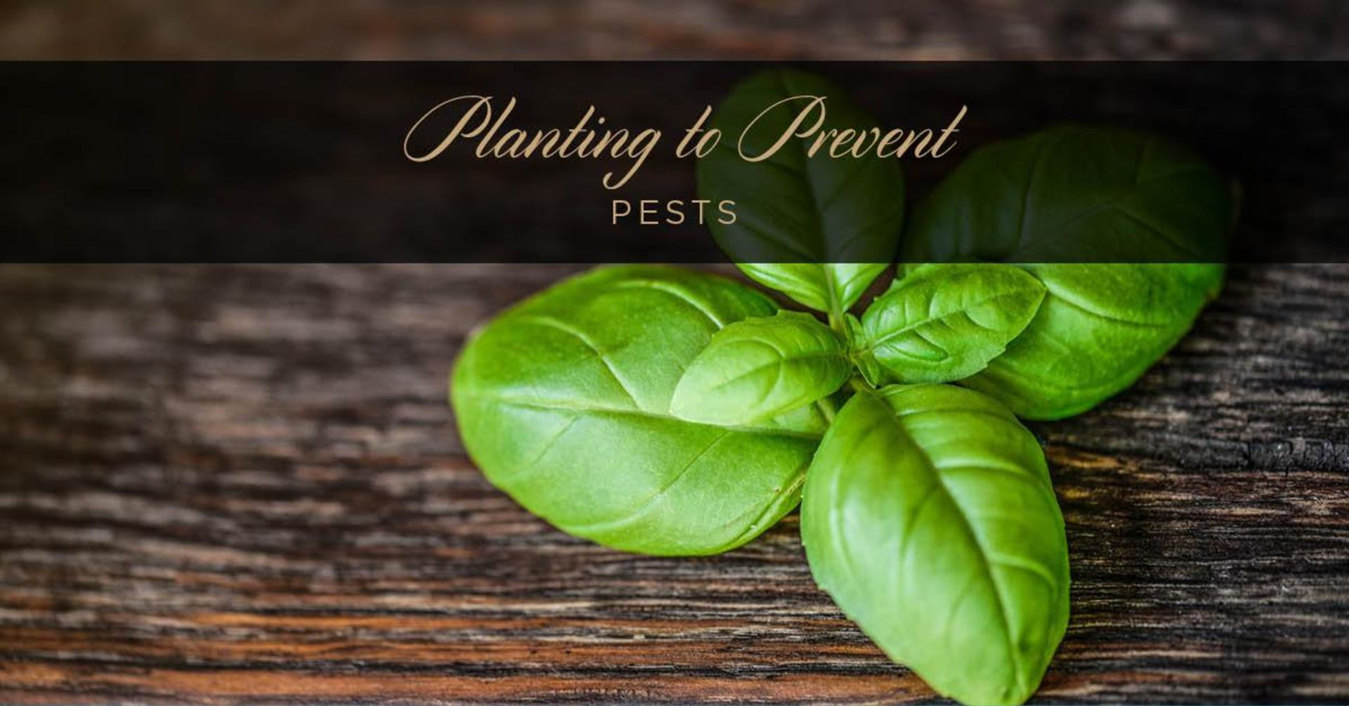 Planting To Prevent Pests