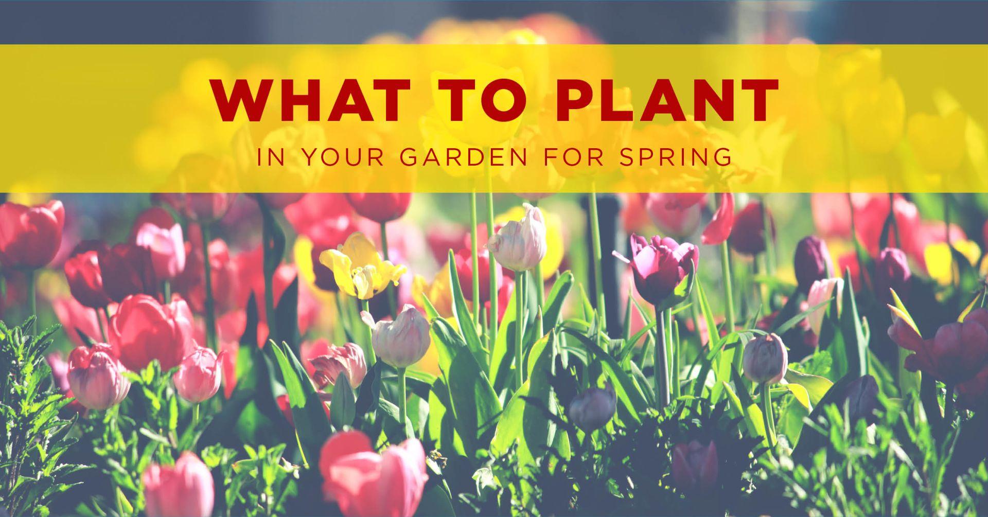 Winter Planting, Spring Enchanting