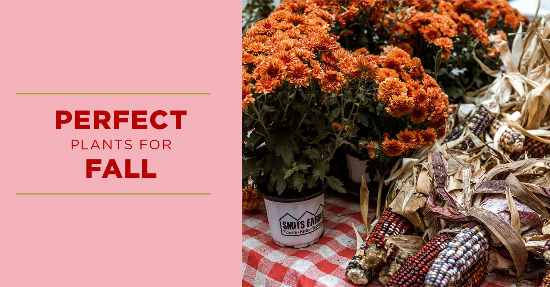 Perfect Plants For Fall