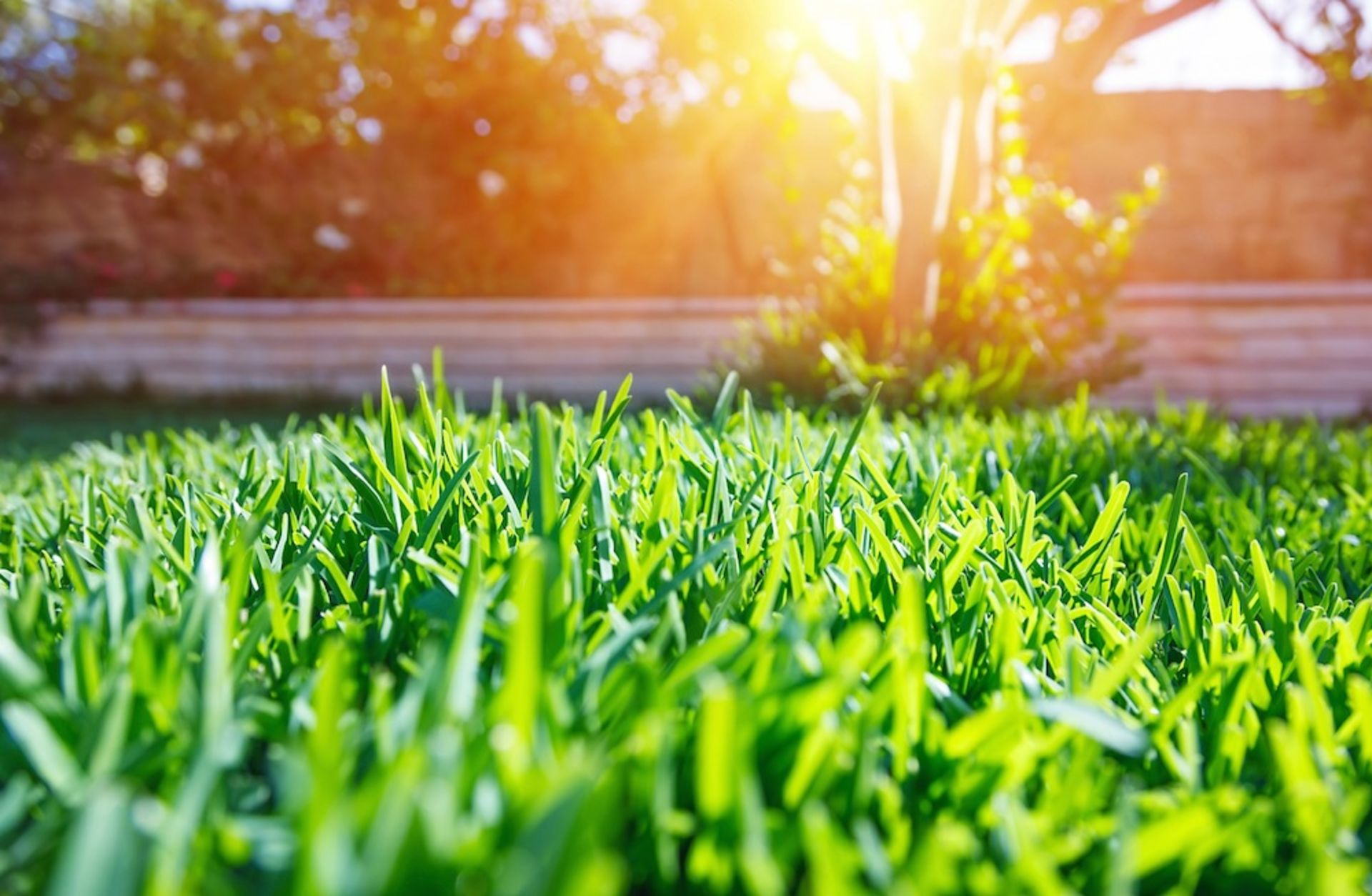 Preparing Your Lawn for Spring: 5 Simple Steps