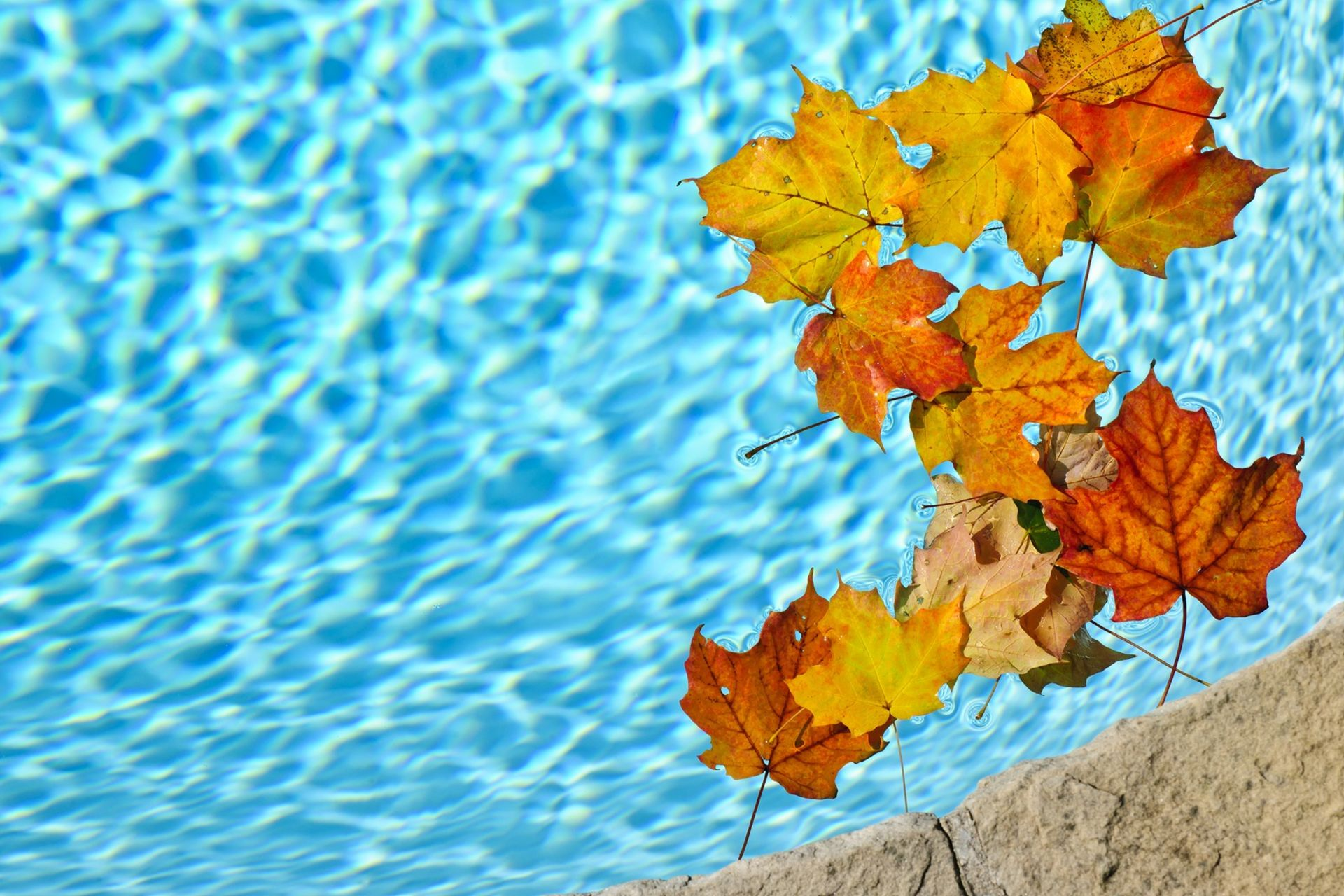 Pool Closings: Best Practices for Homeowners