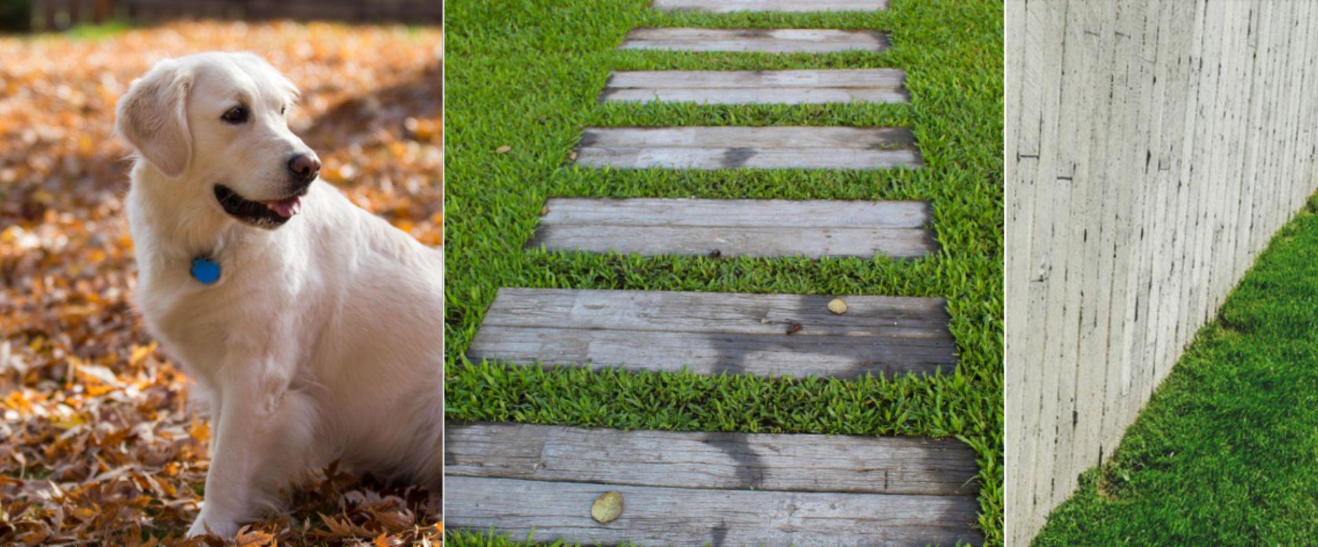 How to Prepare Your Lawn for Winter in San Antonio