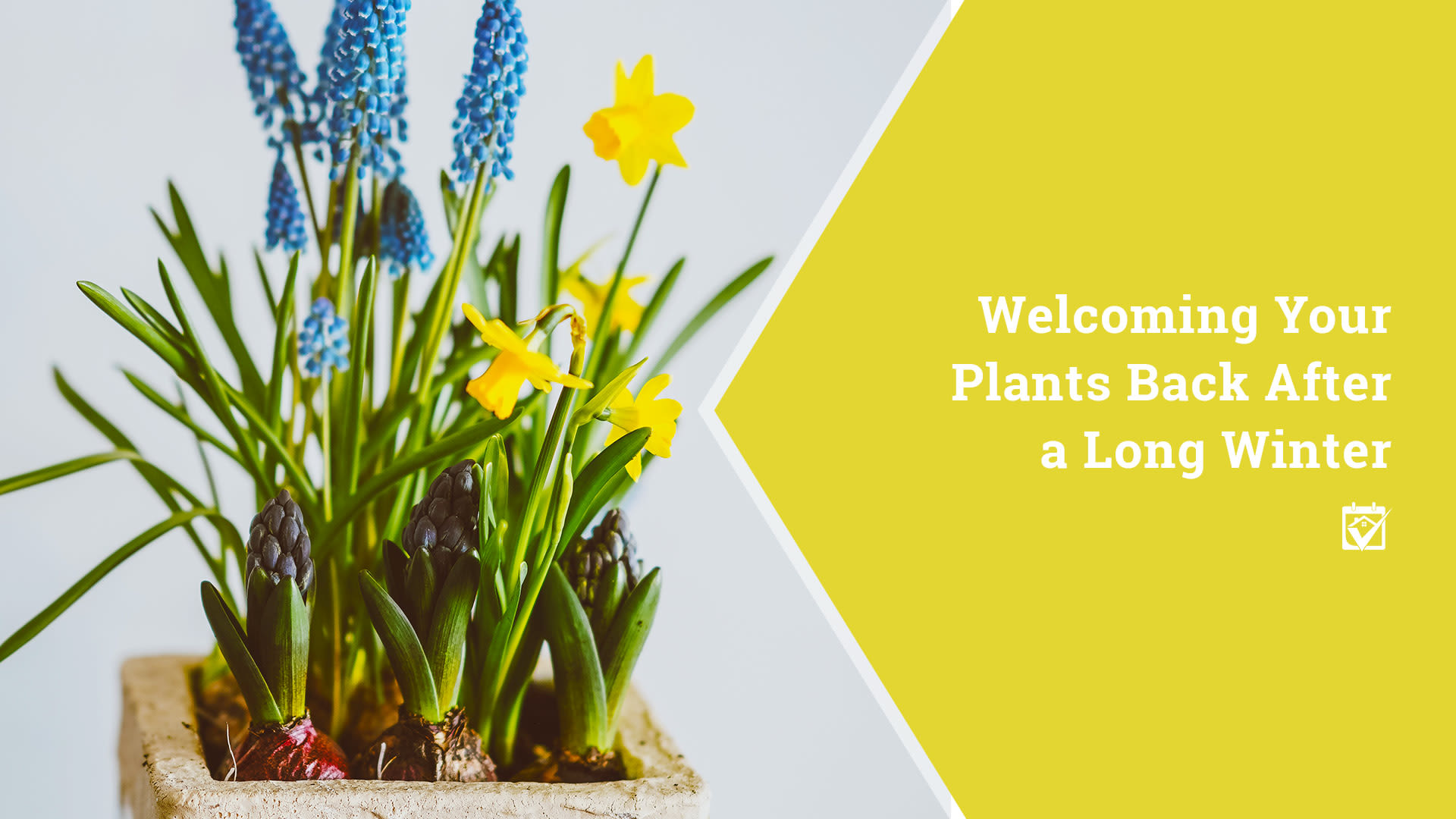 Welcoming Your Plants Back After a Long Winter