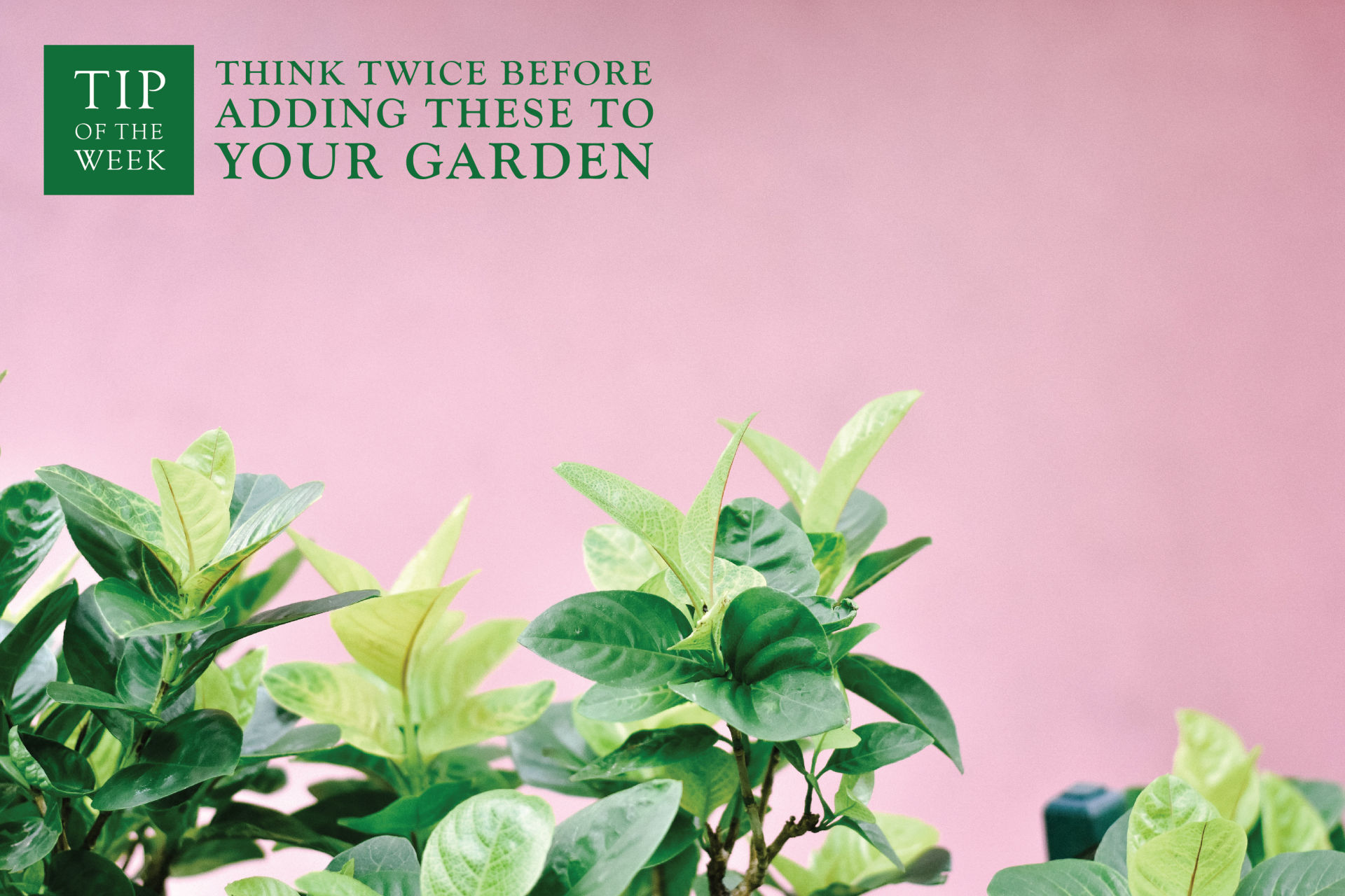 Think Twice Before Adding These to Your Garden