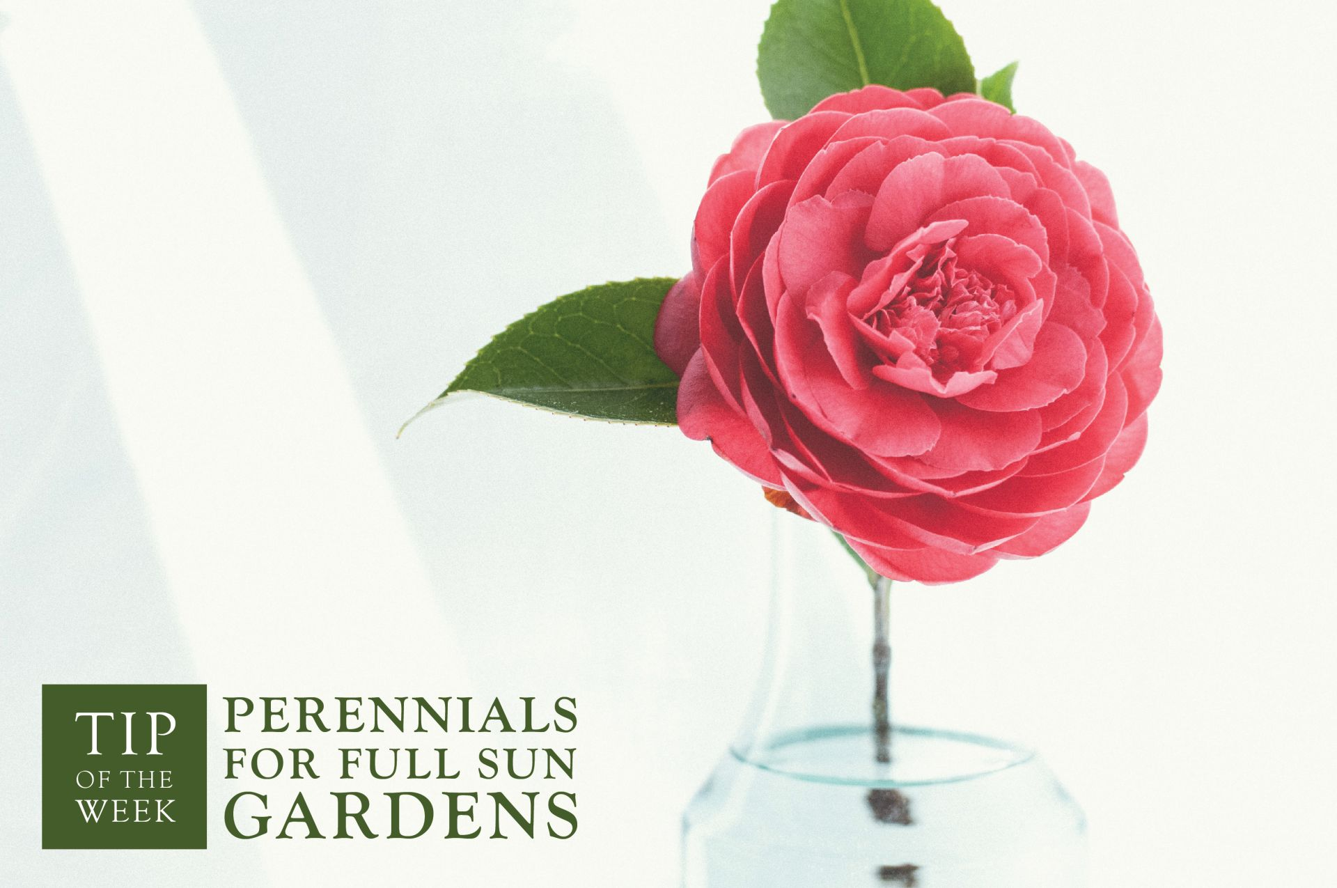 Perennials For Full Sun Gardens