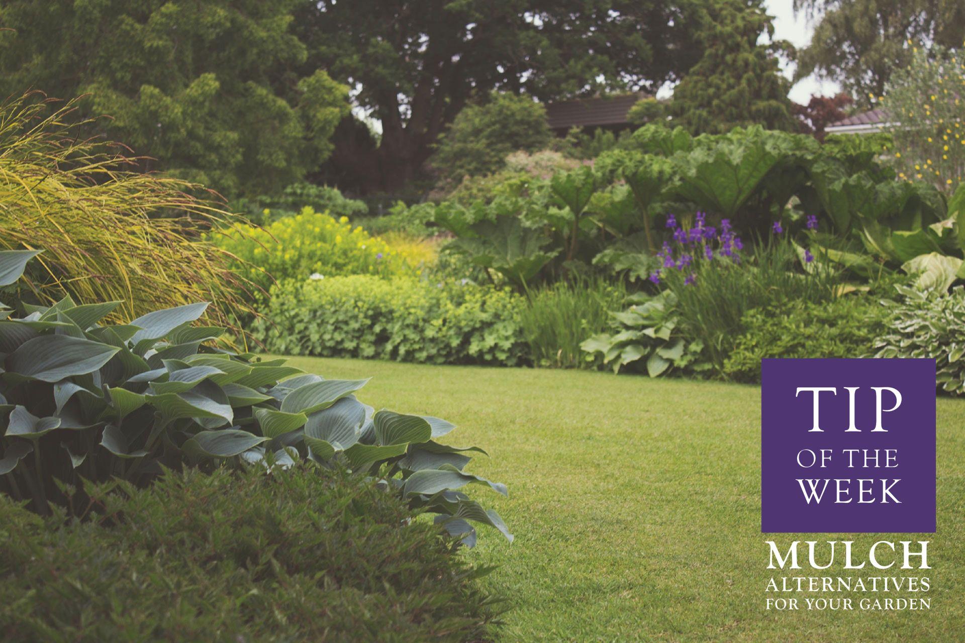 Mulch Alternatives for Your Garden