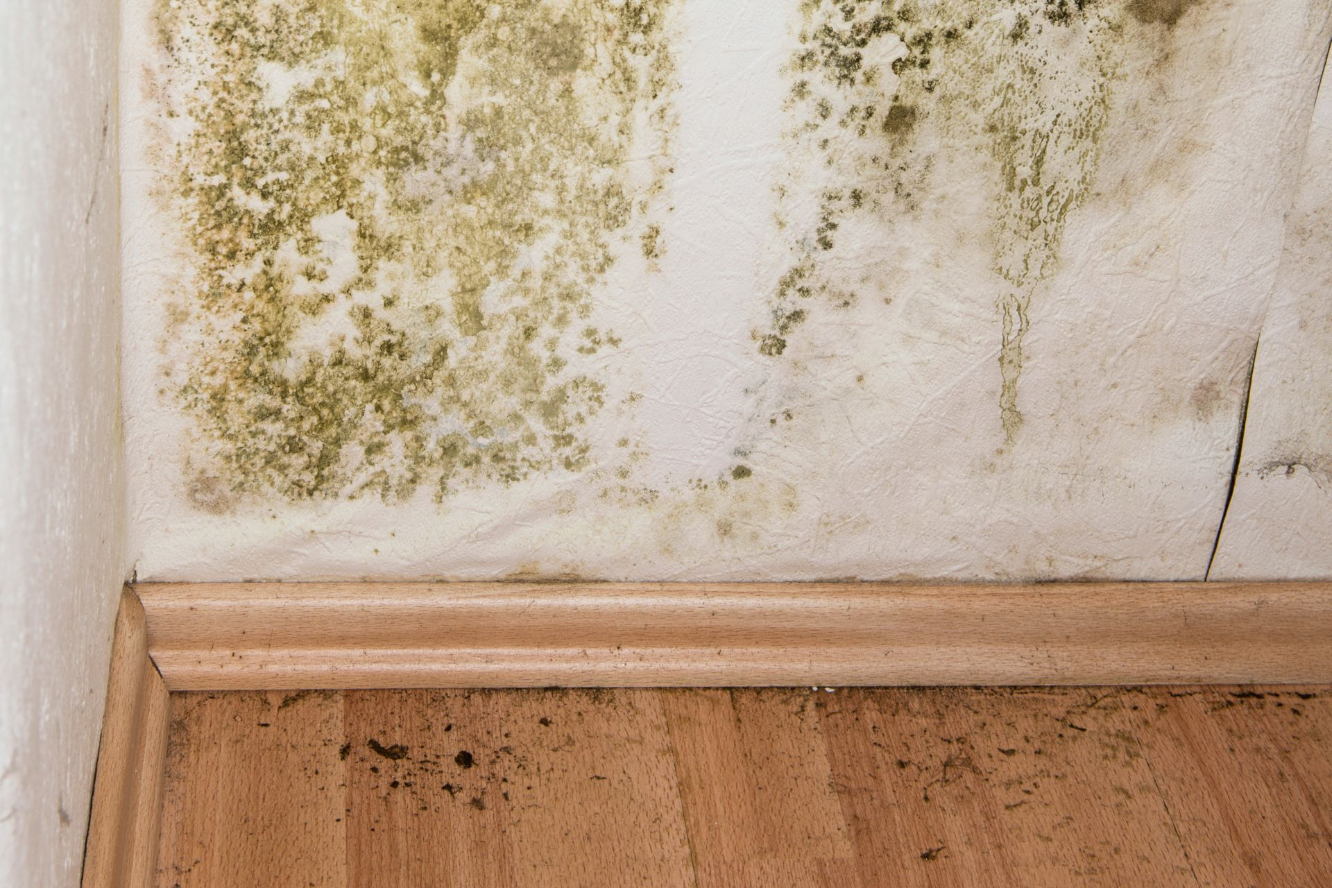 What Do I Need to Know About Mold?