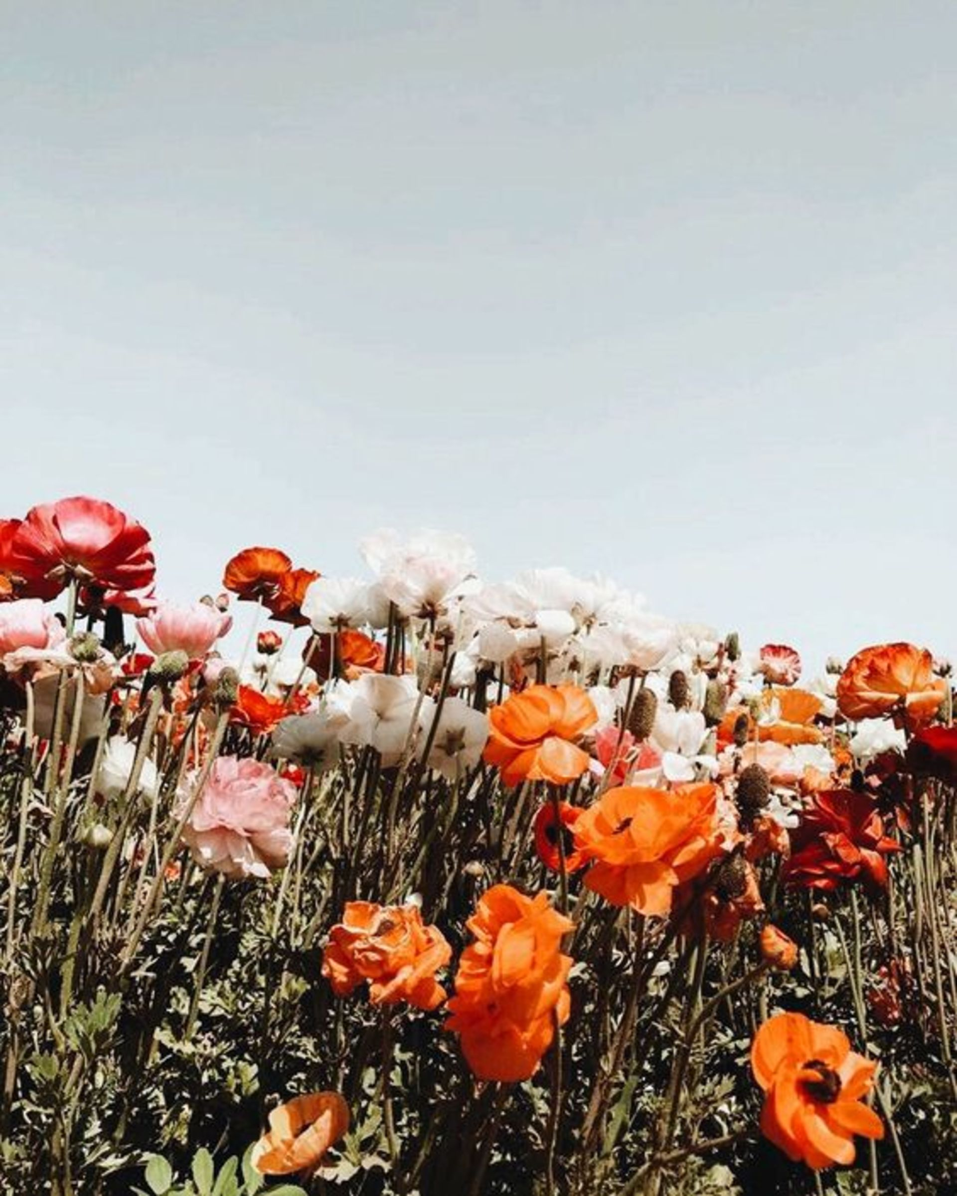 Weeds, Wildflowers or Invasive Plants?