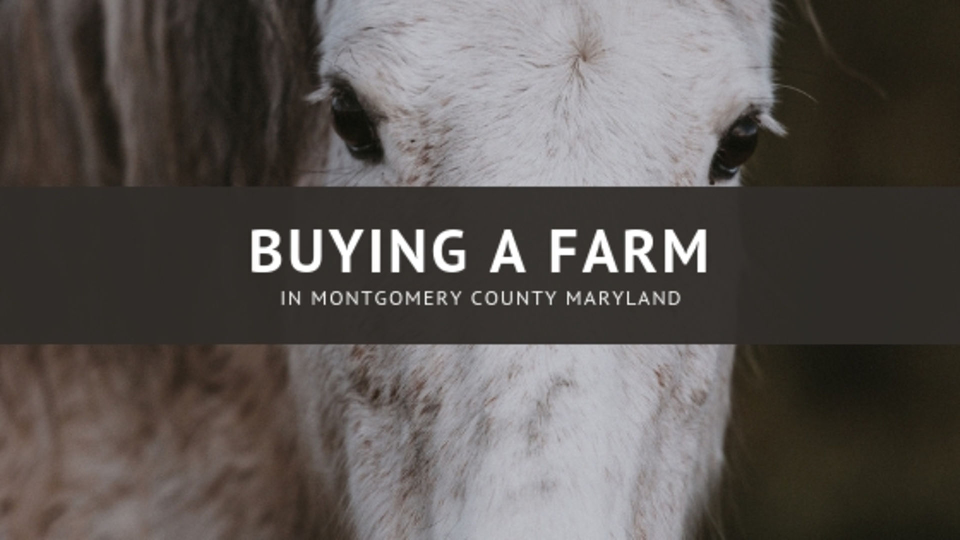 Buying A Farm In Montgomery County, Maryland