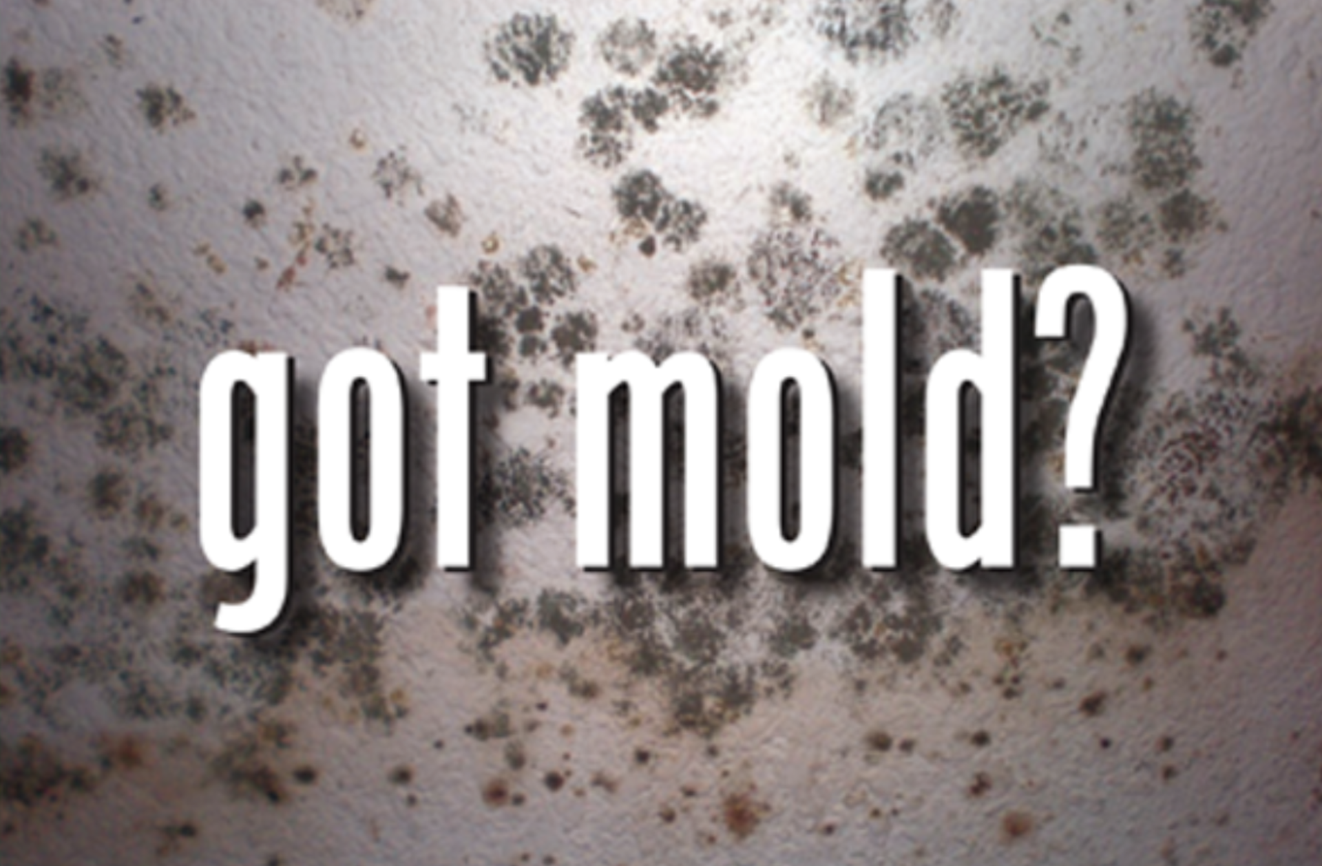 How to Safely Kill Mold