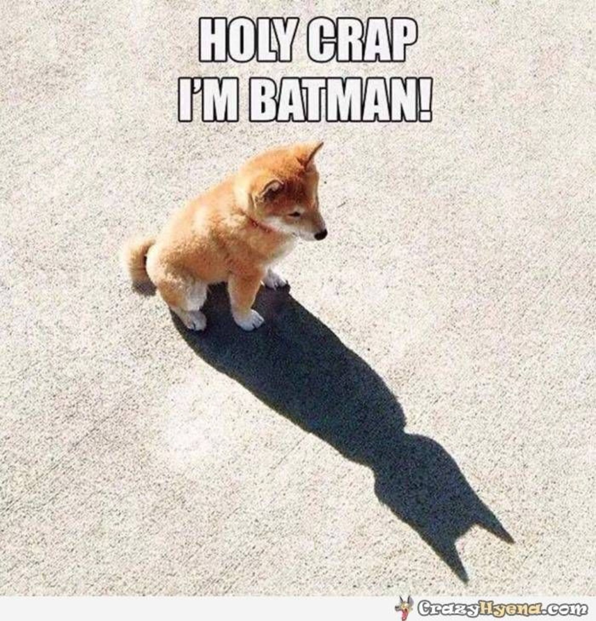 Holy Spring Market Batman