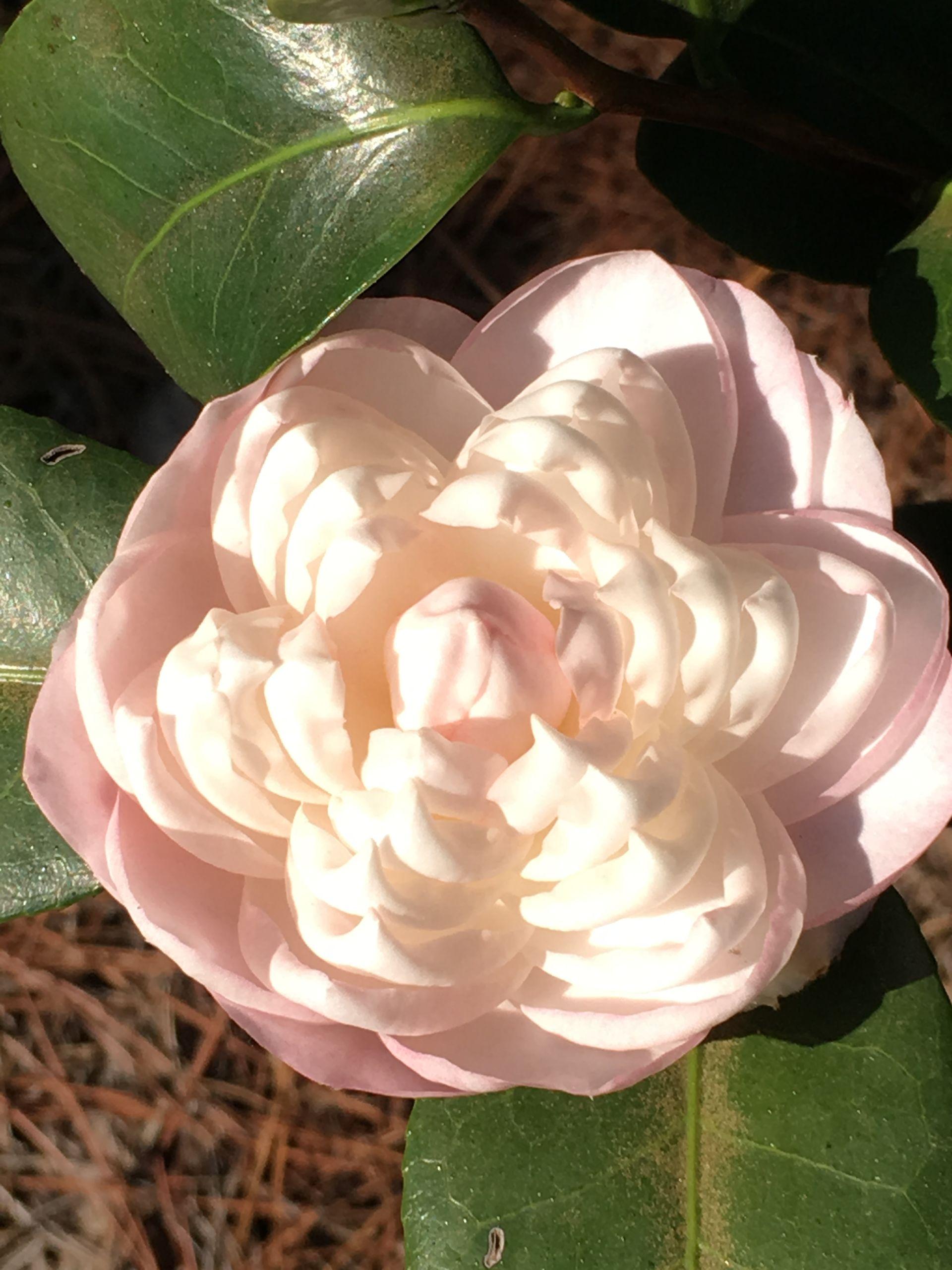 Columbus Botanical Gardens: A Tour