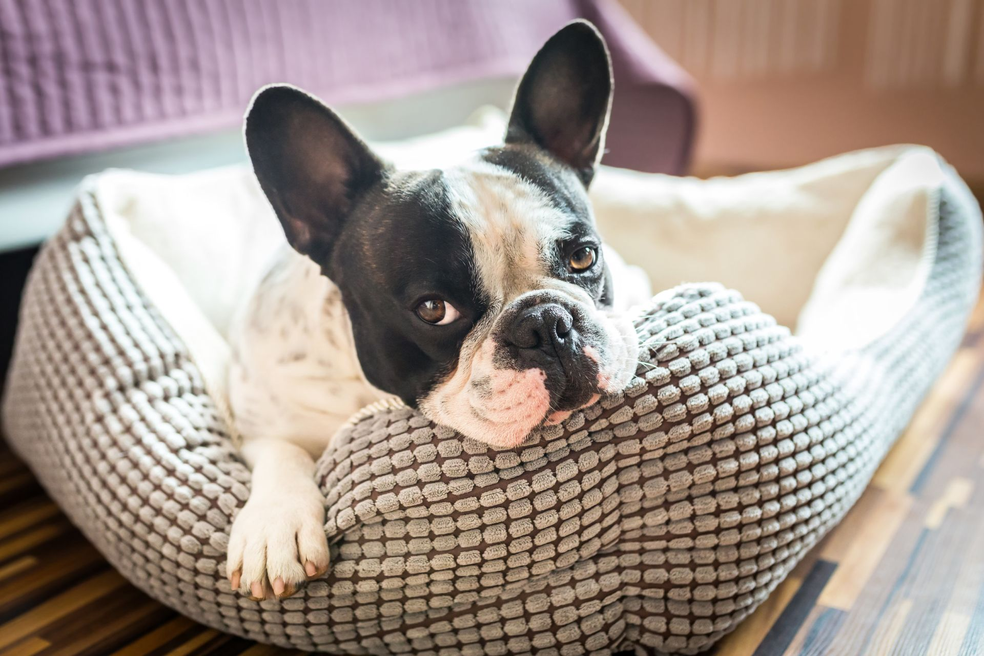 Tips on Selling Your House When You Have Pets