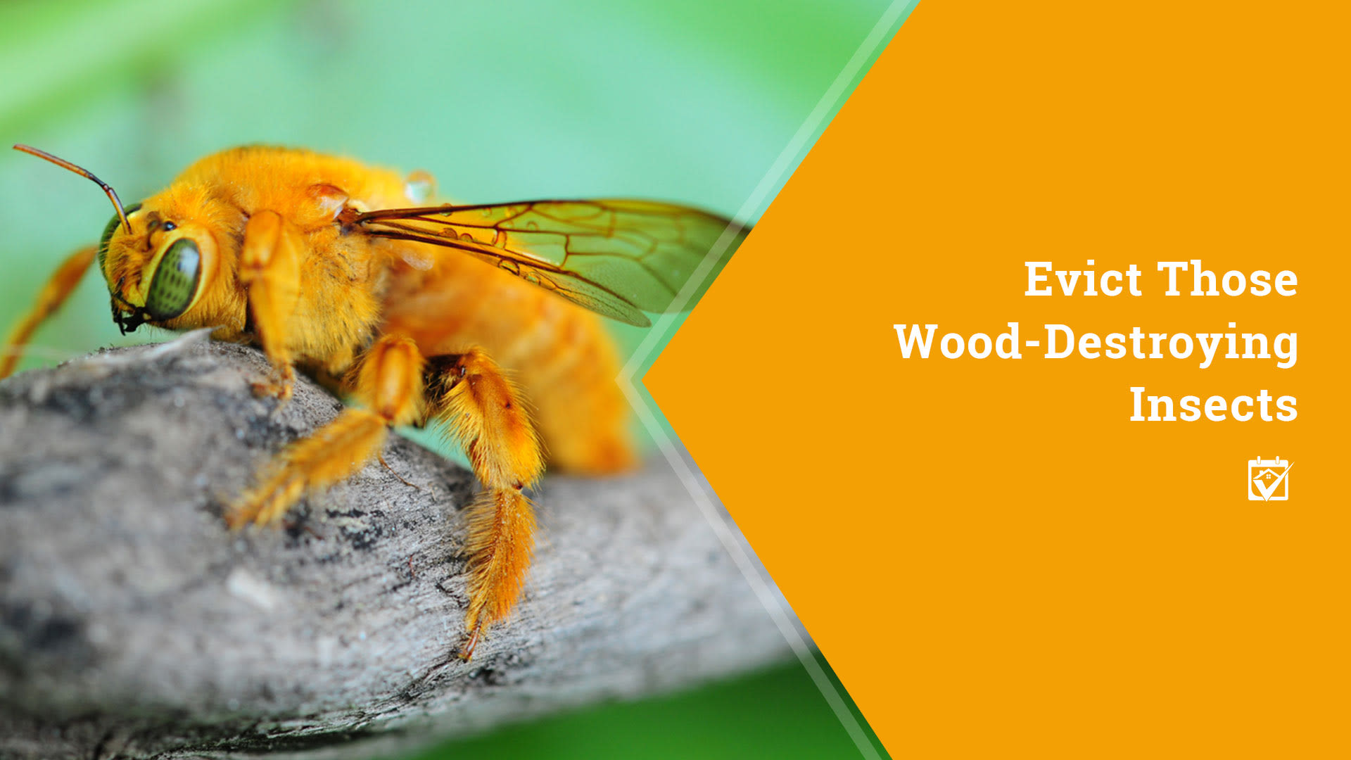 Evict Those Wood Destroying Insects
