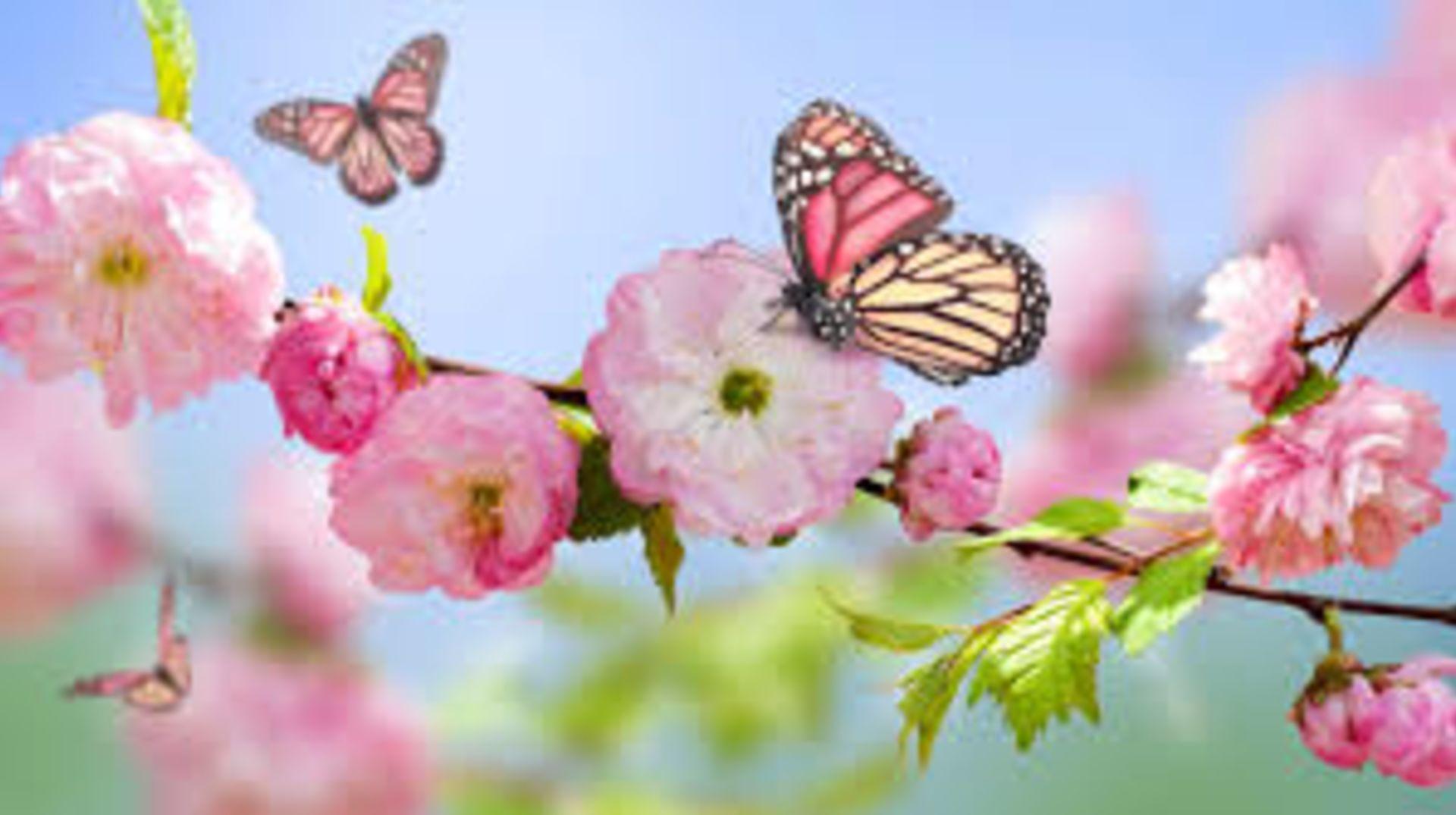 Spring…Finally!