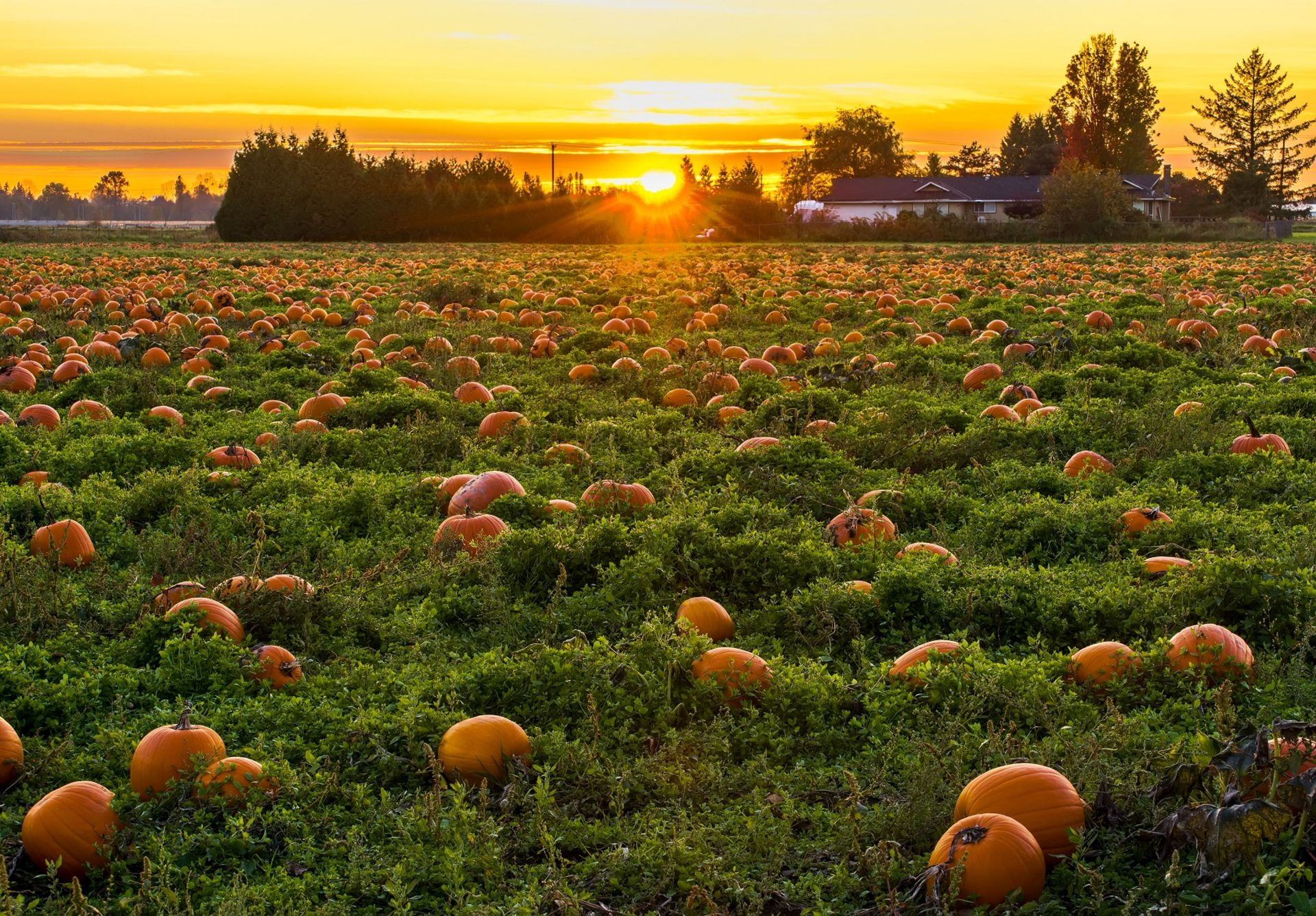 Perfect Pumpkin Patches!