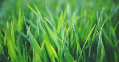 4 Lawn Fixes