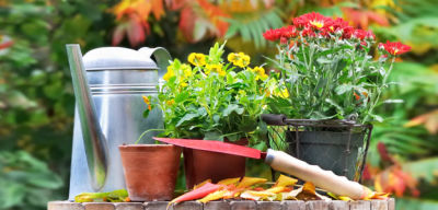 Fall Gardening Tips for Minnesota