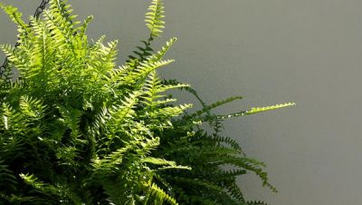 Air purifying houseplants that are good for your home