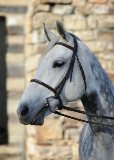 Did you know that working with a Realtor who is a horse property specialist and a fellow equestrian is a benefit?