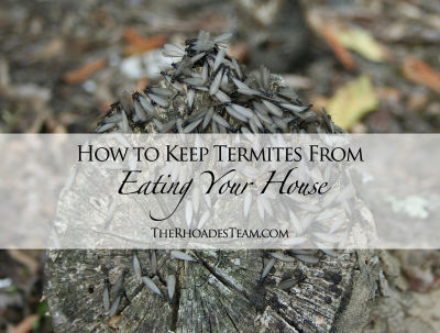 How to Keep Termites From Eating Your House