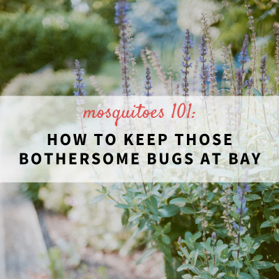 Mosquitos 101:How to keep the bothersome bugs at bay