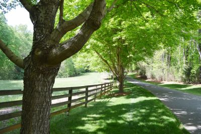 Estate Lot Available with 9+ Acres in Gated Community!