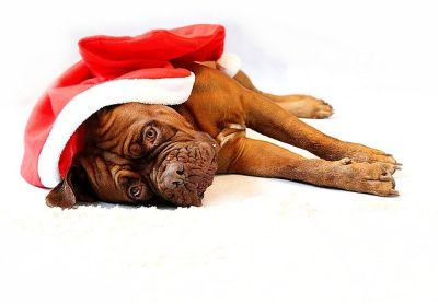 Holiday Pet Hazards Cause Owners to Think Twice
