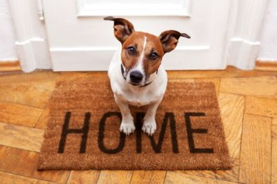 8 Ways to Get Rid of Awful Pet Smells That Turn Off Buyers