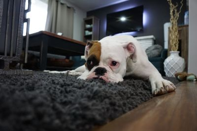 Tips for Proper Dog Etiquette at an Open House