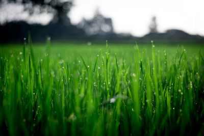 Jump Start Your Lawn Watering