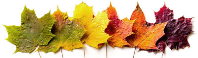 It's Time for Leaf Peeping