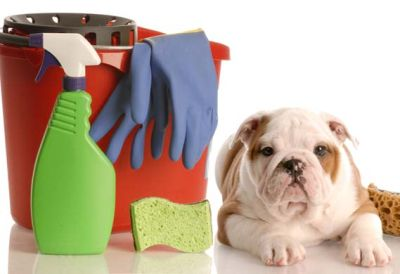 MAKE YOUR HOUSE APPEAR CANINE-FREE