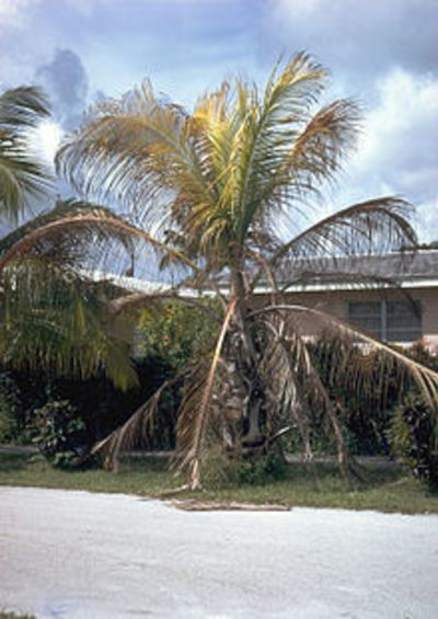 Project your beautiful and valuable Palms!