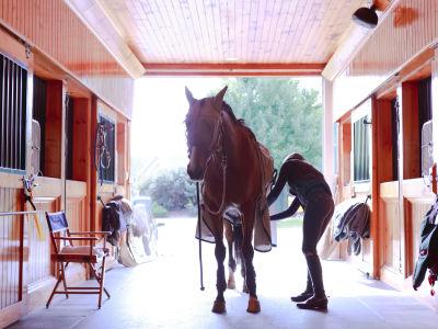 Luxury Equestrian Estate