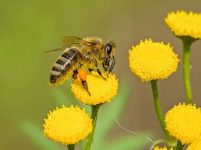Can Your Yard or Deck 'Bee' Part of a Pollinator Pathway?