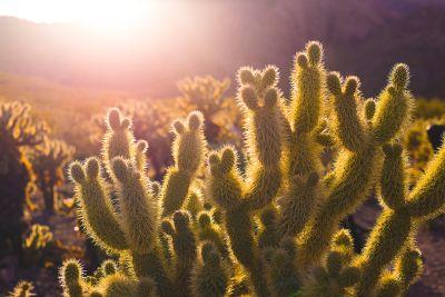 Desert Mountain in Bloom: 5 Flowering Cactus We Love