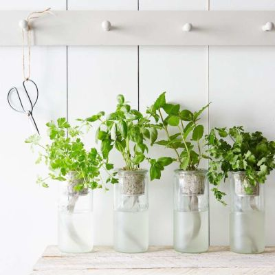 Spice up your kitchen with an easy window herb garden!