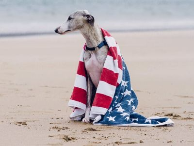 Donate your old beach towels to BARCS