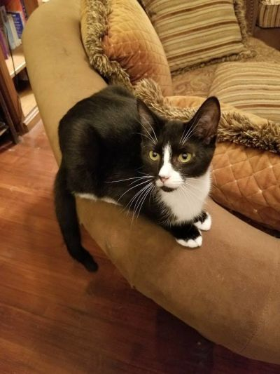 Teriyaki is a fun and friendly kitten who adores playing with other cats