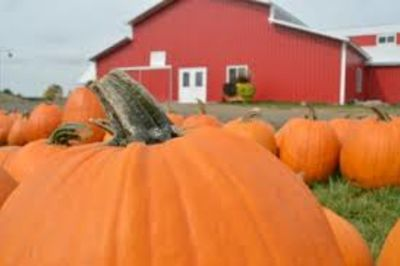 Fall Fun for the Whole Family | Richardsons Adventure Farm, Spring Grove IL
