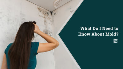 MOLD…What YOU Need to Know